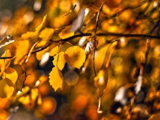 обои ветер колышет желтую листву фото
