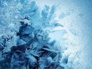 обои зимняя листва мороза фото