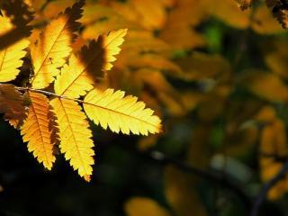 обои Сoлнeчная желтая листва фото