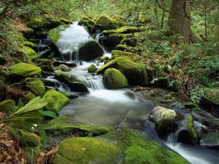 обои Водопад в Национальном парке Тенессии фото