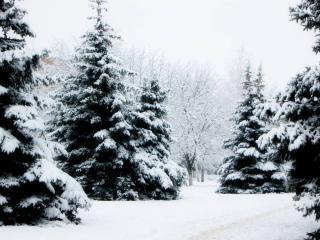 обои В зимнем парке фото