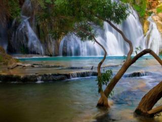 обои Водопад и дерево фото