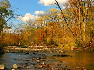 обои Ручей в осеннем лесу, у переправы фото