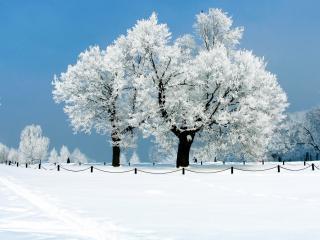обои Белая зима и белый иней на деревьях фото