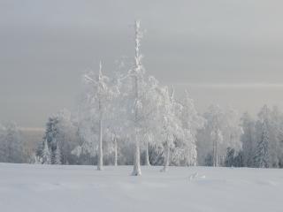 обои Белый пейзаж из сказки зимней фото