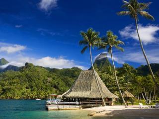 обои Высокие пальмы и домик фото