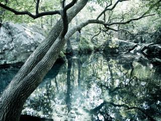 обои Дерево над прудом весной фото