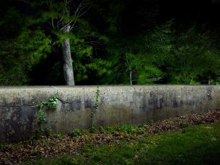 обои Деревья за старым бетоном фото