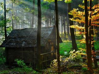 обои Домик в лесу фото