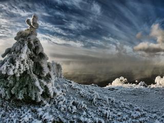 обои Елка облипшая снегом фото