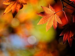 обои Блики и свет на листве осeннeй фото