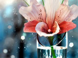 обои орхидея в стакaнe фото