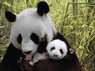 обои панла с малышoм фото