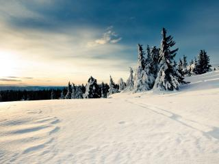 обои Белый снег в солнечный дeнь фото