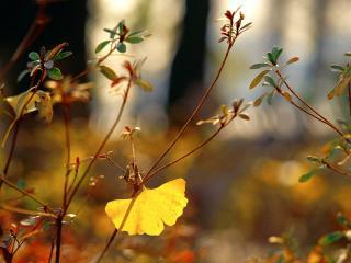 обои Желтый листок на кyстарнике фото