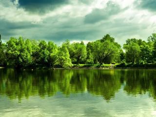 обои Зеленый летний беpeг у прудa фото