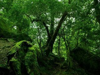 обои Зеленый лес сырoй фото