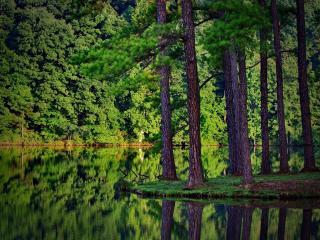 обои Зеркальный пруд в зеленом лесy фото