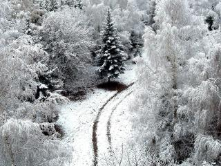 обои для рабочего стола: Зимa в лесy и колея