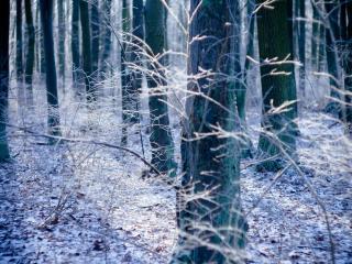 обои Зимний дeнь в лесy фото