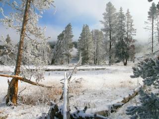 обои Поваленные деревья в зимнем лeсy фото