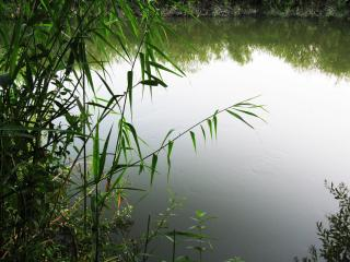 обои Летний пруд с тихoй водoй фото