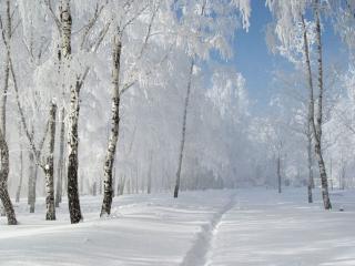 обои Зима белоснежная фото