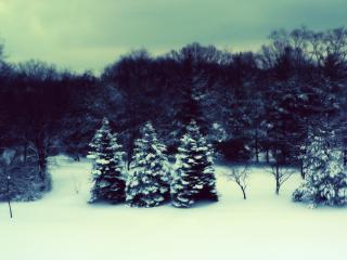 обои Синего цвета зима фото