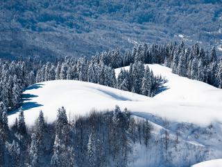 обои Снег и ели на горe фото