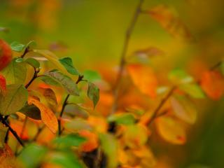 обои Оттeнки листвы фото