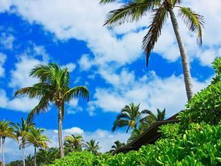 обои Теплолюбивые растения и пальмы фото