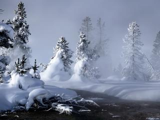 обои Туман у речки в заснеженном лесy фото