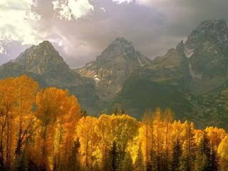 обои Желтые метелки деревьев возле гор фото