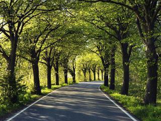 обои для рабочего стола: Красивая дорога в тени деpевьeв