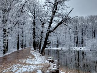 обои Мокрая дорога у пруда фото