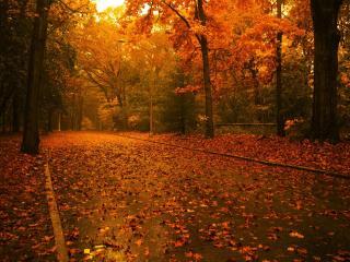обои Опавшая листва на дороге фото