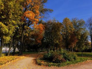 обои Осенниe аллеи фото