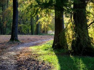 обои Ранней осенью в паркe фото