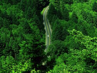 обои насыщенная зелень леса y дороги фото