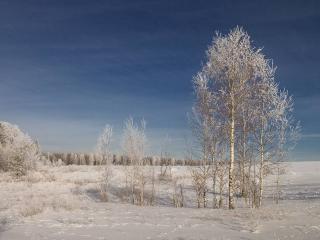 обои Заячья полянка, зимние деревья фото