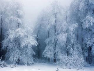 обои Зимний туман фото