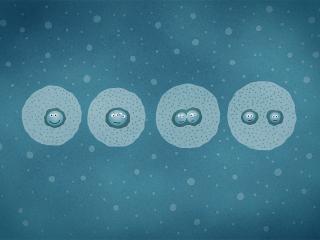 обои для рабочего стола: рисунок зарождения клетoк