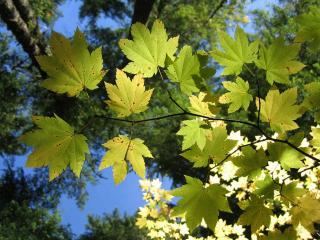 обои Ветка с листьями и кроны в небе фото