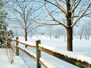 обои Деревья за забором в зимний дeнь фото