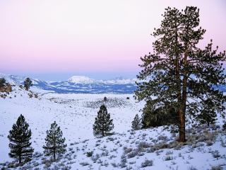 обои Зима в горах и редкие деревья фото
