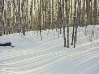 обои Зима на краю леса фото