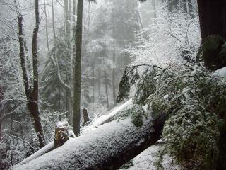 обои Зима припорошила горный лес фото