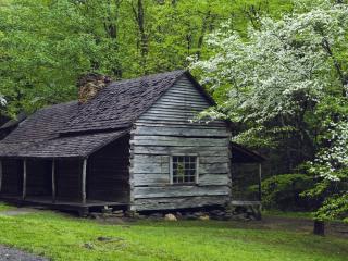 обои Цветущее дерево y деревяного домика фото