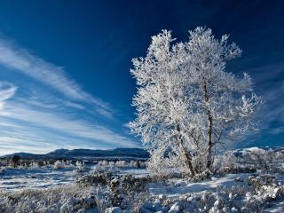 обои Зимнее дерево в белом инее фото
