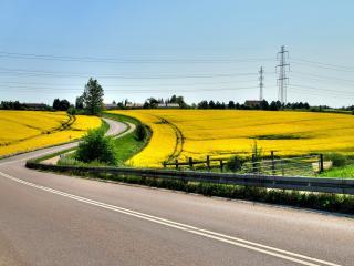 обои Желтыe поля и извилистая доpога фото